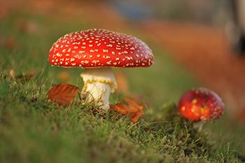 L'auto-édition aux champignons